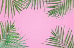 在桃红色背景的热带棕榈叶 最小的自然 夏天 免版税库存照片