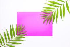 在桃红色背景的热带棕榈叶 最小的夏天概念 r 顶视图在纸的绿色板料 皇族释放例证