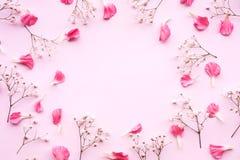 在桃红色背景的瓣花与拷贝空间 平的位置 库存照片