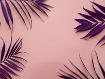 在桃红色背景的紫色棕榈叶 库存图片