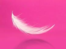 在桃红色背景的羽毛 库存图片