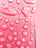 在桃红色背景的雨水 库存照片