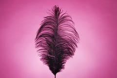 在桃红色的黑羽毛 库存图片