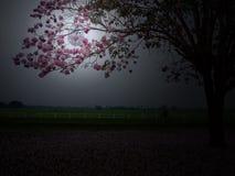 在桃红色花后的满月 库存照片