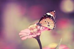 在桃红色花的减速火箭和葡萄酒口气蝴蝶在庭院里在晴天 免版税图库摄影