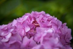 在桃红色花的婚戒 库存照片