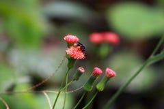 在桃红色花的蜂在庭院里 免版税库存照片