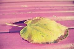 在桃红色长凳的黄色,金黄秋天叶子,在一个晴天 例证百合红色样式葡萄酒 库存图片