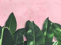 在桃红色难看的东西混凝土墙的绿色叶子 免版税库存照片