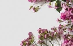 在桃红色颜色小的玫瑰和肥皂草属之植物在白色背景 库存照片