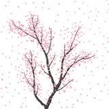 在桃红色颜色的开花的树在白色背景 库存照片