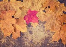 在框架安排的五颜六色的秋叶 库存照片