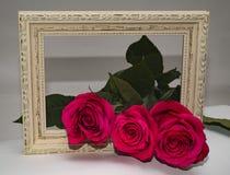 在框架的三朵玫瑰 免版税库存图片