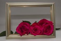 在框架的三朵玫瑰 库存照片