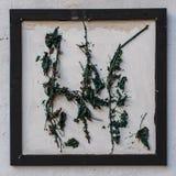 在框架的凋枯的叶子 白色墙壁背景 免版税图库摄影
