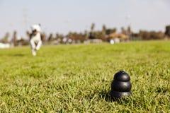 尾随在公园草的玩具的跑 库存照片