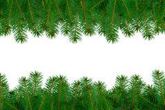 在框架的杉木分支 免版税库存照片