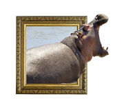 在框架的河马与3d作用 库存照片