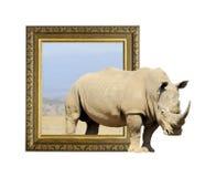 在框架的犀牛与3d作用 库存图片