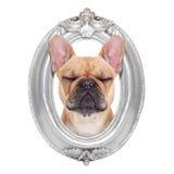 在框架的狗 库存图片