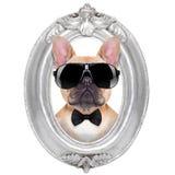 在框架的狗 免版税图库摄影