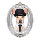 在框架的狗 免版税库存照片