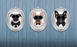 在框架的狗 免版税库存图片