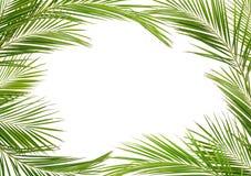 在框架的绿色棕榈分支 免版税库存照片