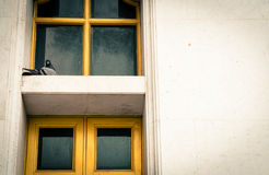 在框架窗口的鸟 库存照片