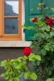在框架门面的英国兰开斯特家族族徽与木头绿色窗口快门  图库摄影