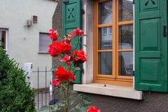 在框架门面的英国兰开斯特家族族徽与木头绿色窗口快门  库存图片