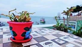 在桌上的一张花盆 免版税库存图片