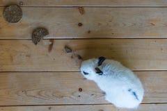 在桌上的兔子 图库摄影