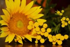 在桌上的向日葵 免版税库存图片