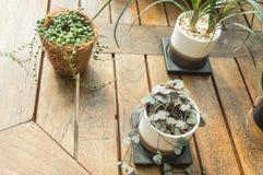 在桌上的小的绿色室内植物 免版税库存图片
