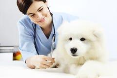 在桌上的微笑的兽医审查的狗在狩医诊所 库存照片