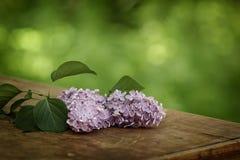 在桌上的新鲜的淡紫色花 免版税库存图片