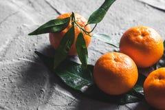 在桌上的柑橘:普通话,与刀子的蜜桔 新鲜的有机水多的果子 免版税库存图片
