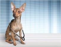 在桌上的狗兽医 免版税图库摄影