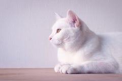 在桌上的白色猫睡眠 免版税库存图片