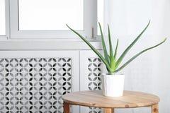 在桌上的盆的芦荟维拉植物在屋子里 免版税库存图片