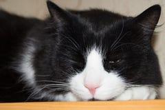 在桌上的睡觉猫 免版税图库摄影