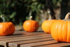 在桌上的秋天微型南瓜 库存照片