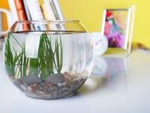 在桌上的空的鱼缸与书 库存图片