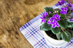 在桌上的精美紫色紫罗兰 图库摄影