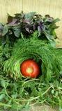 在桌上的绿色菜 图库摄影