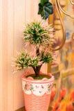 在桌上的罐与在内部的杉树  免版税库存图片