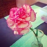 在桌上的美丽的桃红色花 免版税图库摄影