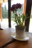 在桌上的花瓶与康乃馨 在背景中是俯视山的窗口 库存图片