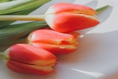 在桌上的花郁金香,坚硬光,苛刻的阴影 免版税库存照片